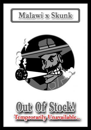 Malawi x Skunk (OUT OF STOCK)